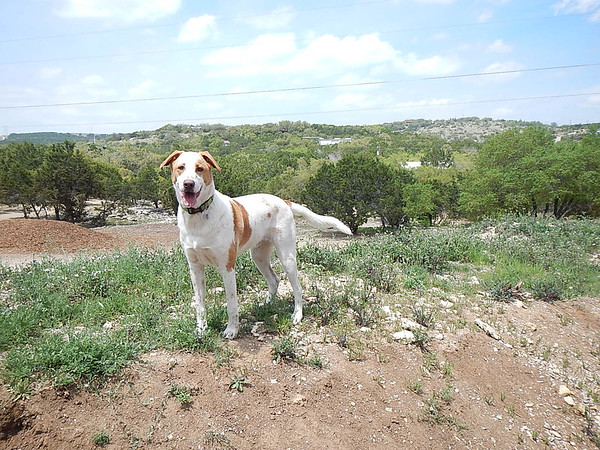 Merle with a beautiful veiw of the Texas Hill Country
