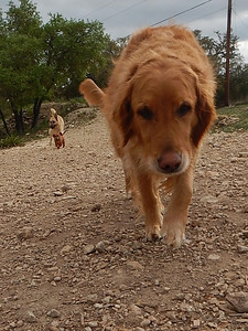 The beautiful Zoe with Brodie and Sully taking up the rear