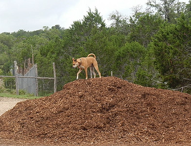 Sophie C is queen of the mulch pile